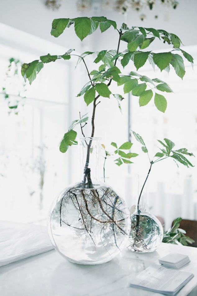 glasvas växt.jpg